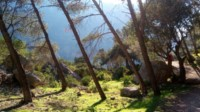 lush vegetation hiking grazalema spain